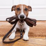 Naughty Dog ! – 8 Ways to Reward your Dog to Achieve Better Behaviours