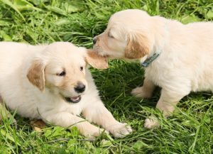 Understanding Puppy Play