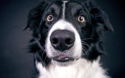 'Why the Sit?' By Bobby the Border Collie